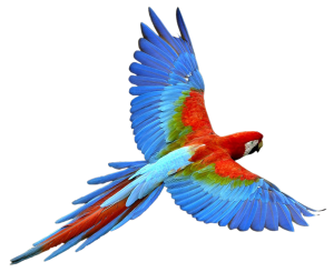 parrot_evolutionary purpose